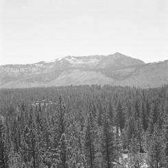 Half Forest 2