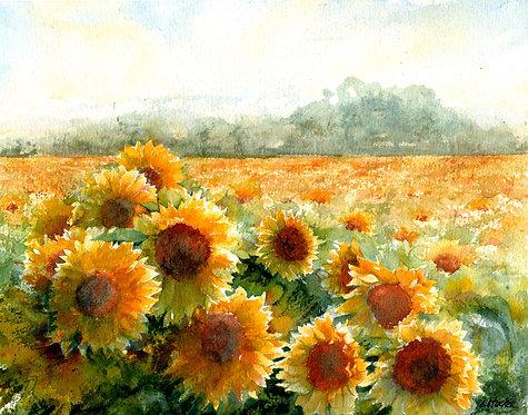 Sunflower Fields Print - Framed