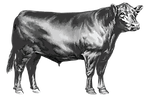 cow only transparent .png