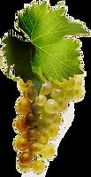 Raisin Chardonnay