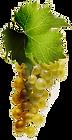grappe-de-raisin-blanc.png