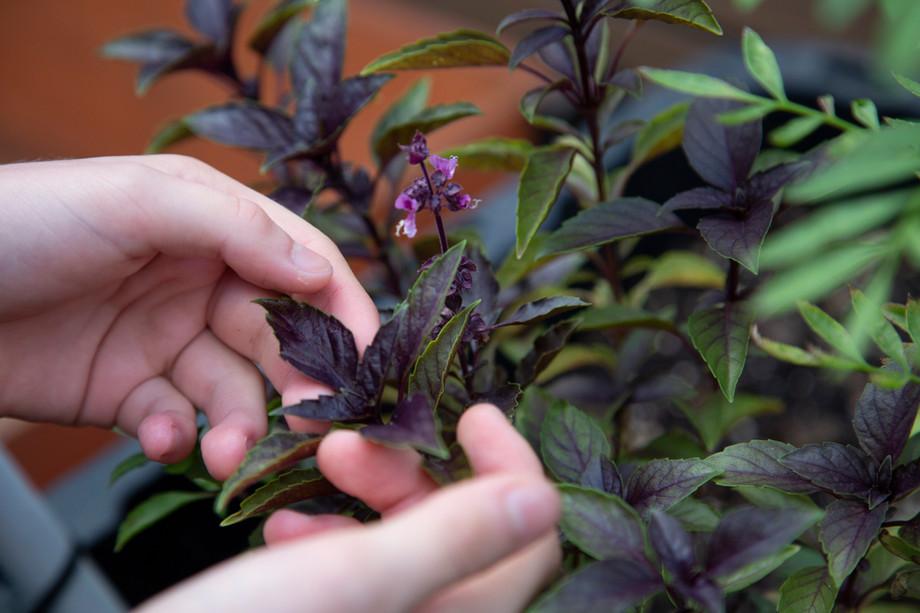 Renarts Horticulture 2018-2019