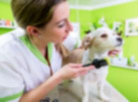 peluqueria-canina-new.jpg