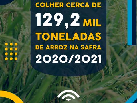 Goiás deve contribuir para incremento na safra brasileira de arroz