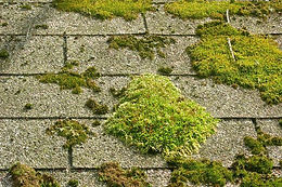 moss and mould treatments