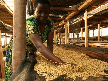 A coffee business in Uganda is creating a win-win situation with smallholder farmers