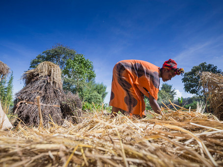 New rural finance programme to help millions of Ethiopian farmers build resilience