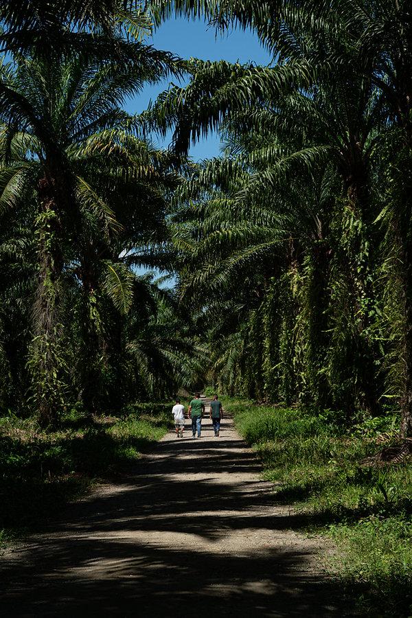 Elias Assaf, fotografó honduras, banana, fotógrafo documental, bananero, honduran photographer