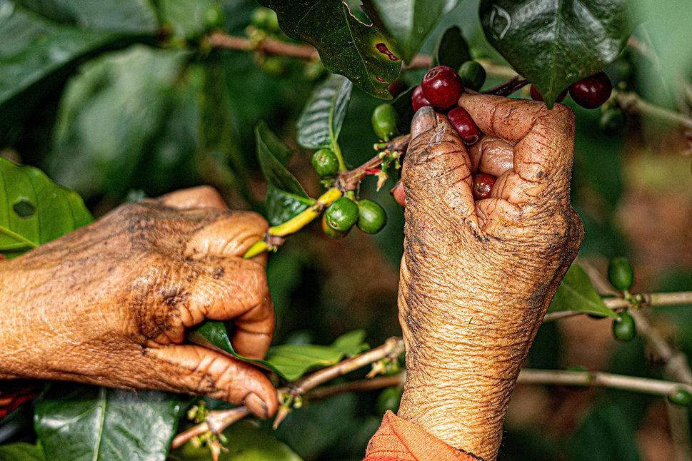 Elias Assaf, san pedro sula, honduras, fotografo profesional, professional photographer, fotografo documental, coffeebrewers, cafe honduras , starbucks, hondurancoffee, ong, ngo