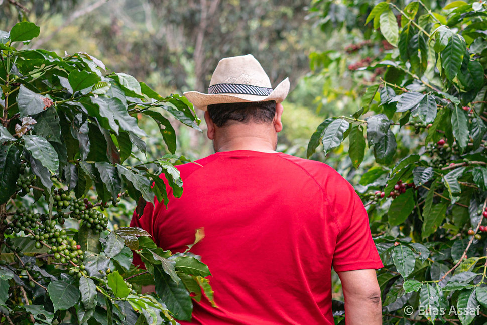 Elias Assaf, san pedro sula, honduras, fotografo profesional, professional photographer, fotografo documental, coffeebrewers