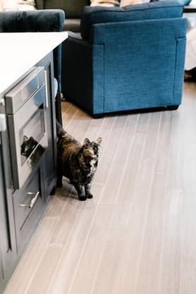 royal blue white modern kitchen remodel Amanda George Interior Design hello little kitty