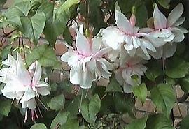 pinkmarshmallowfuchsia.jpg