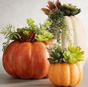 succulent pumpkins.jpg