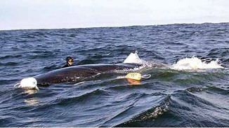Tale of Whales and Whistling for Dolphins