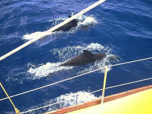 Dolphin Escort.jpg