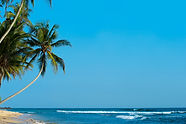 beach-coast-coconut-trees-319893.jpg
