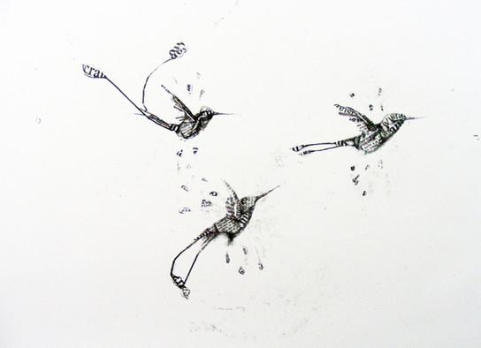 Colibrí Trio 2