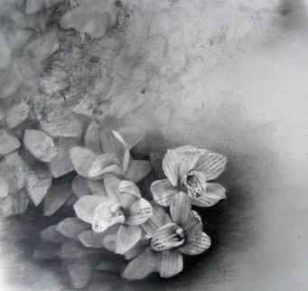 Orquideas 1