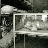 Pompeii Warehouse