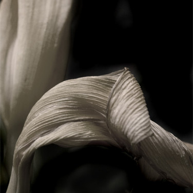 Lily #2, 2007