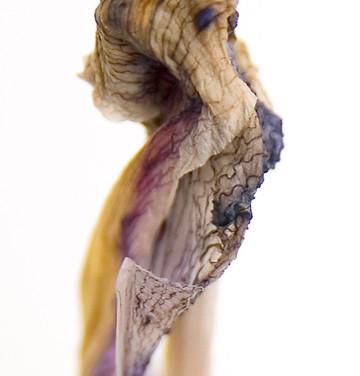 Iris #2, 2008