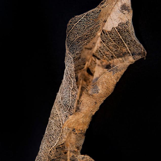 Leaf Skeleton #6