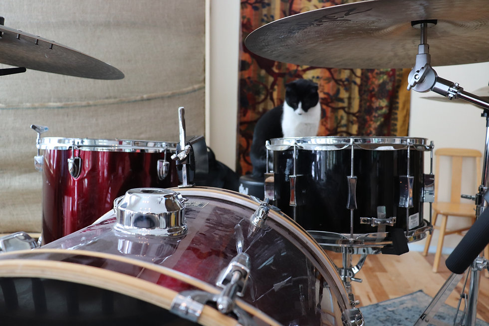 cat and drums.JPG