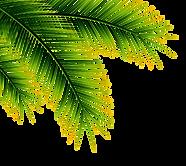 plantas1.png