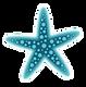 estrella-marina.png