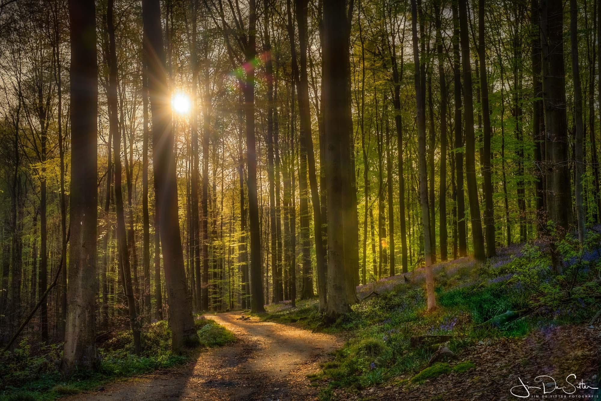 Landschapsfoto : Een magische ochtend in het Hallerbos