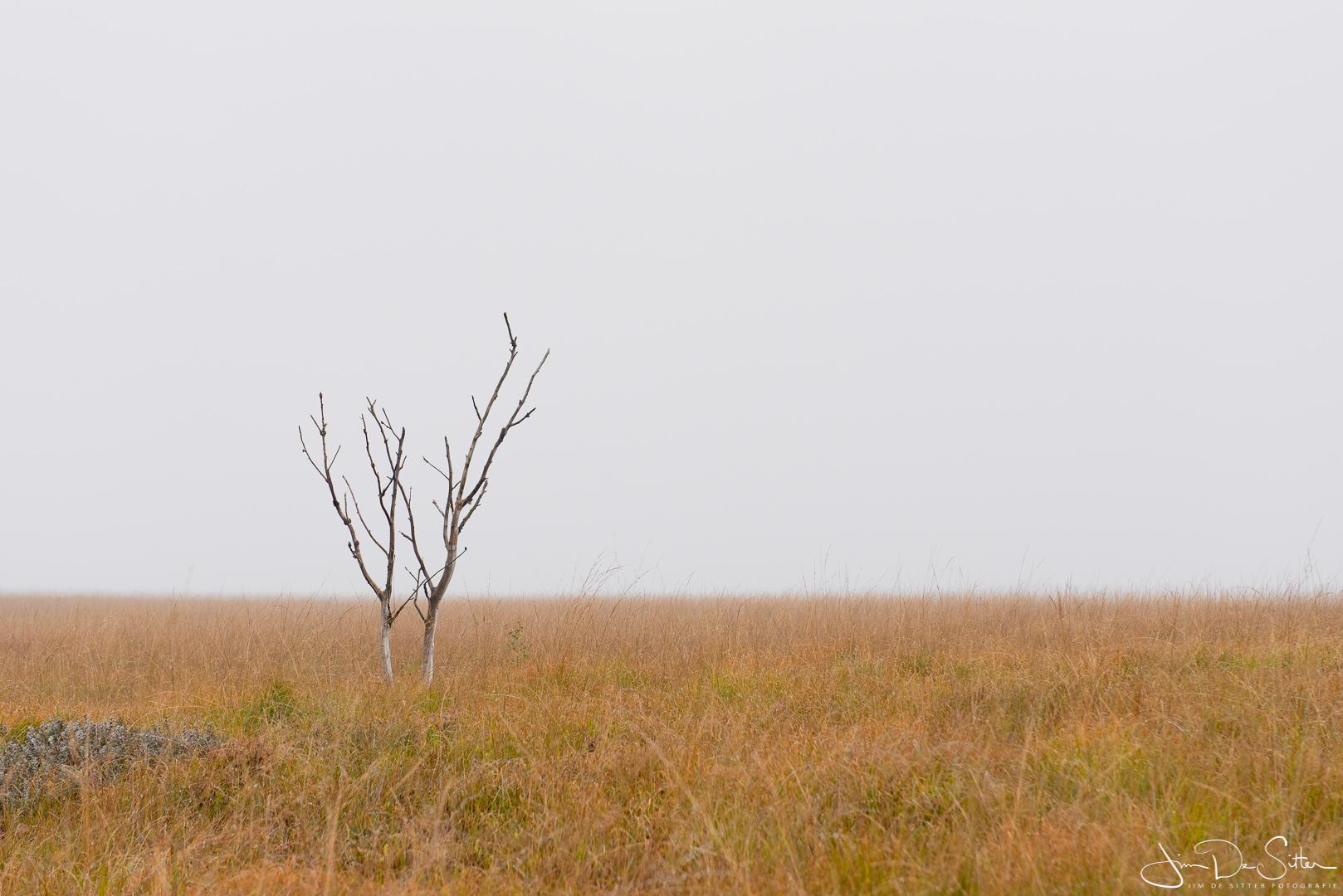 Landschapsfoto : Een eenzaam boompje op de Hoge Venen