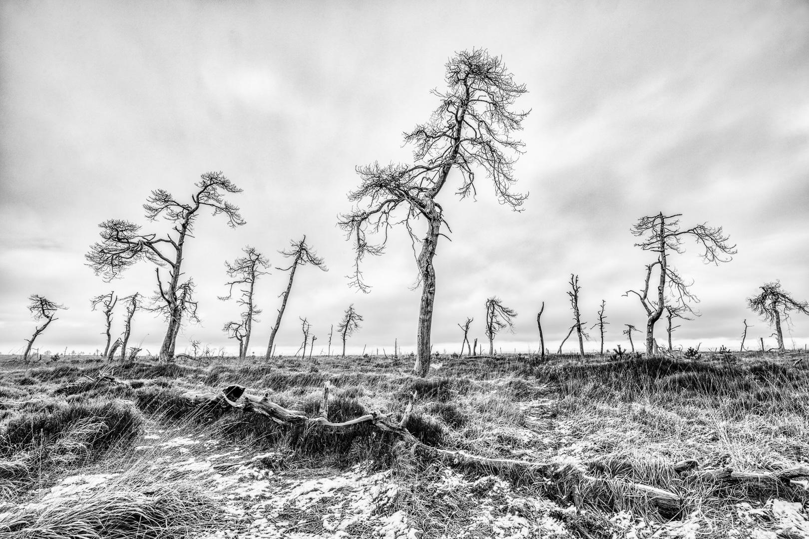 Landschapsfoto : Een eerste laagje sneeuw in Noir Flohay