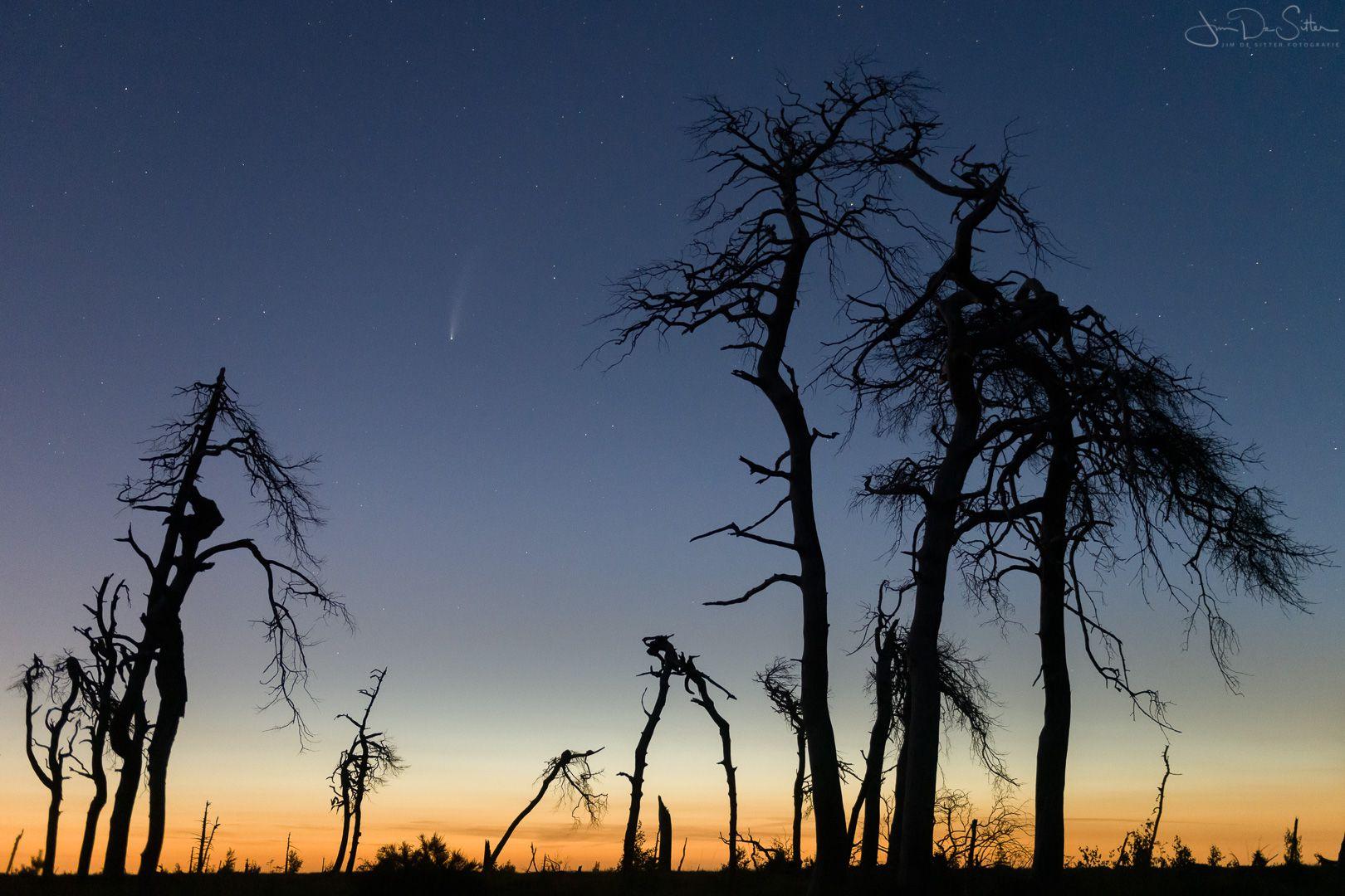 Landschapsfoto : Komeet Neowise boven de skeletbomen van Noir Flohay