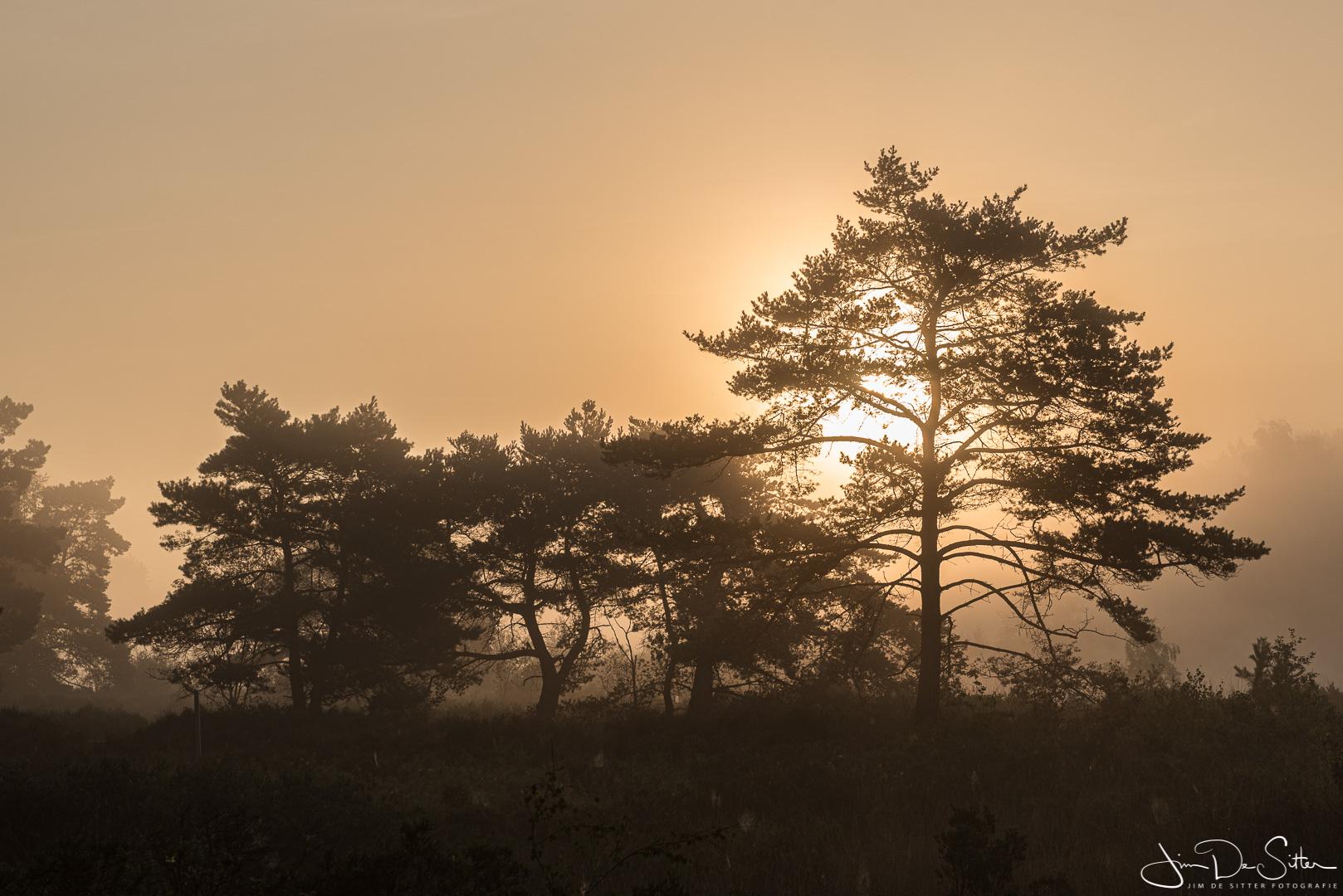Landschapsfoto : De Teut op een zomerse ochtend