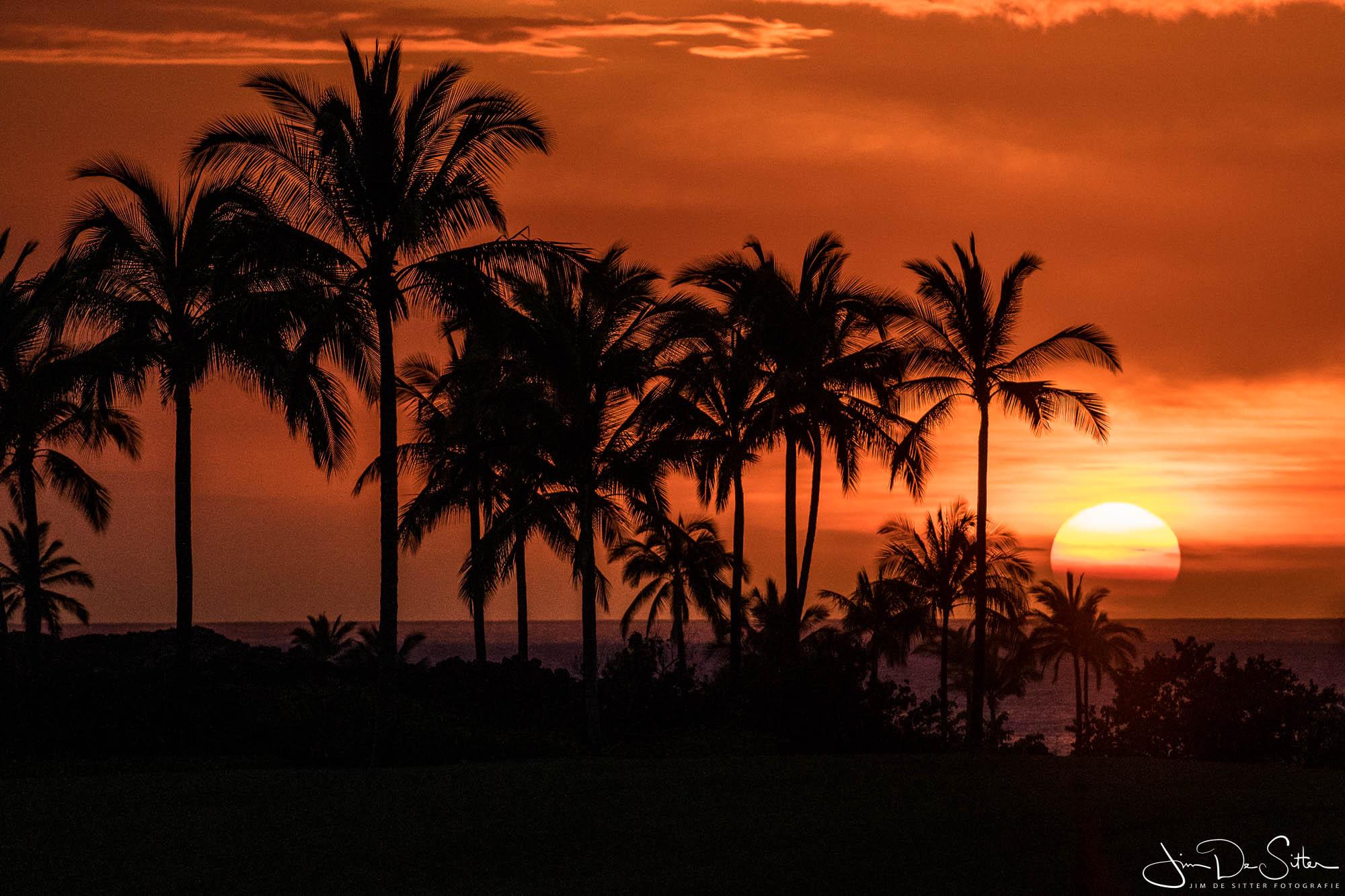 Landschapsfoto : Zonsondergang bij de palmbomen van Hawaii