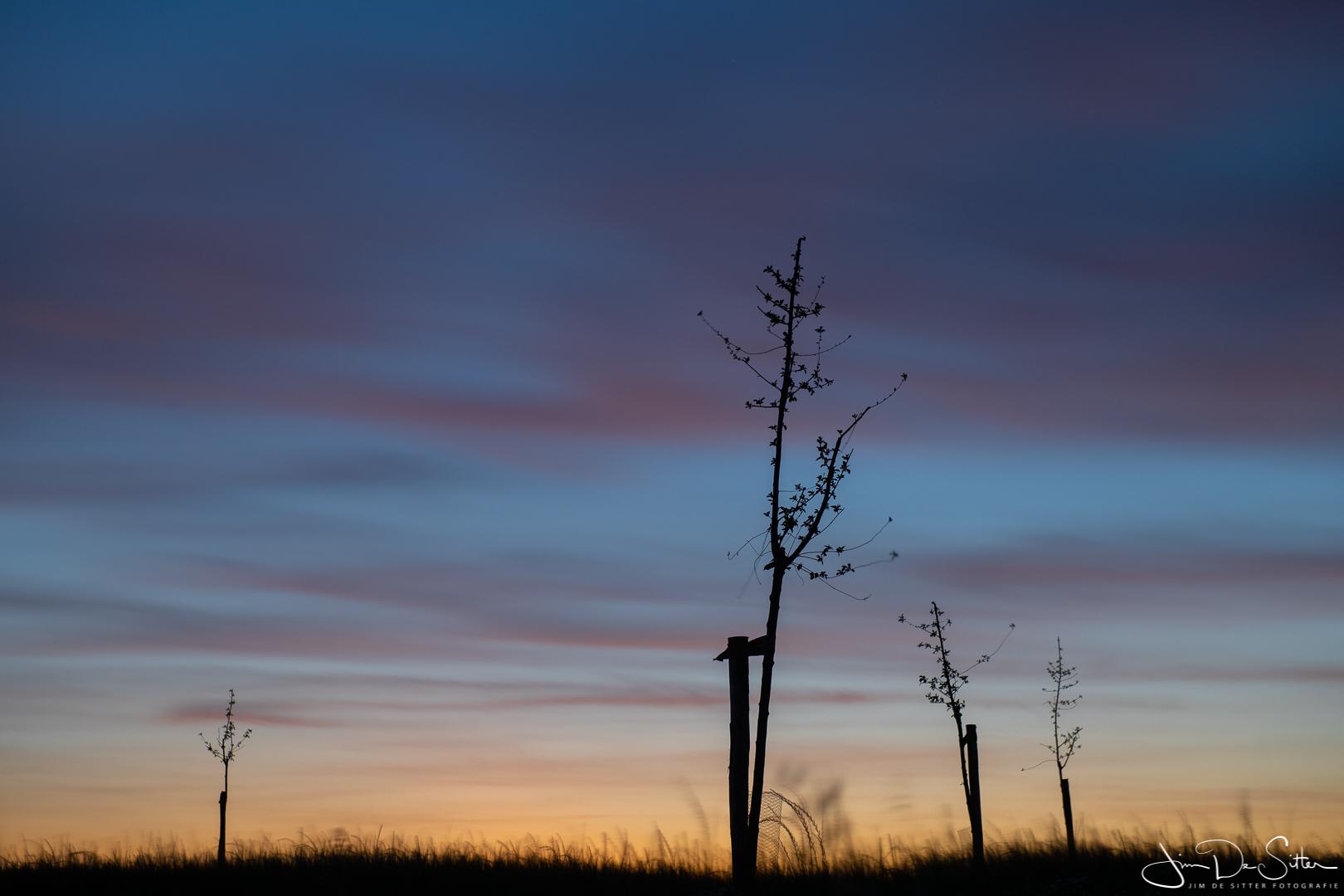 Landschapsfoto : Zonsondergang in Kobbegem