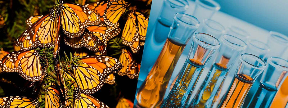 Monarchs_Tubes_600.jpg