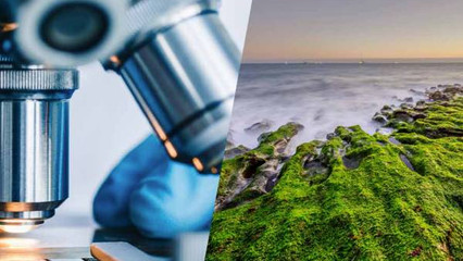 Startup Sandbox is Transforming Santa Cruz into a Biotech Hub