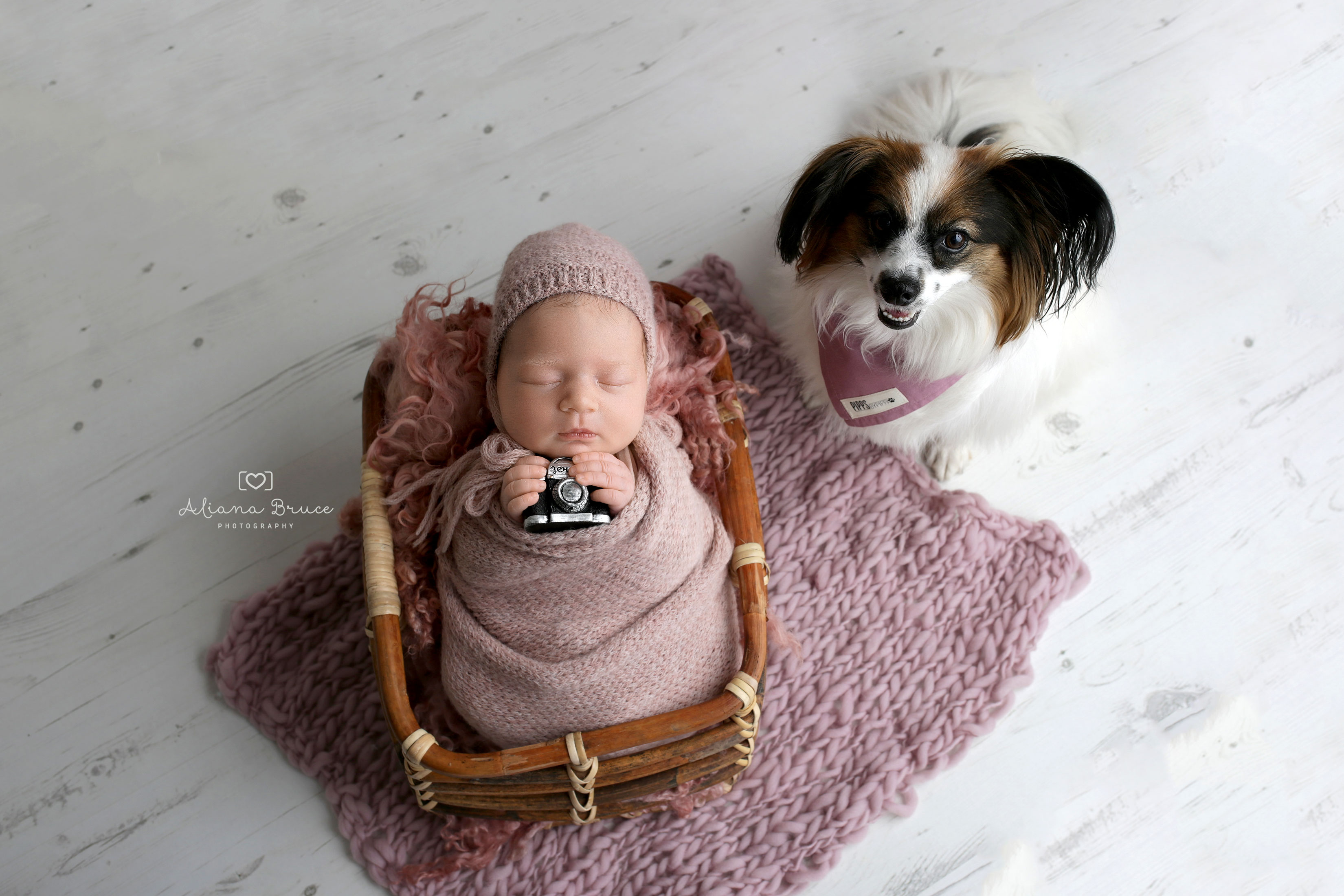 Dog and Newborn Photoshoot