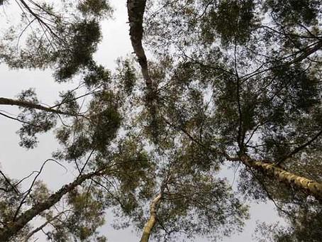 Hongos: el internet de los árboles