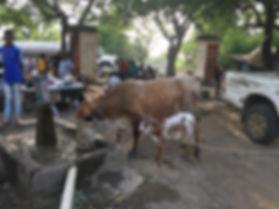 Haiti 07.jpg