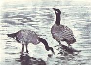 geese 2c.jpg