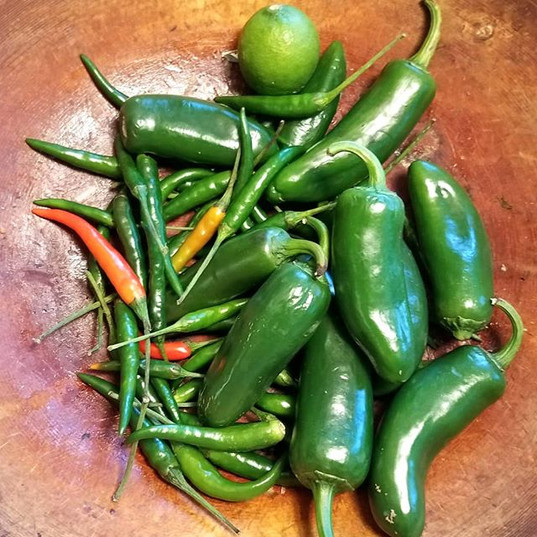 I want my Chili's, Chile, Chilli Pepper!