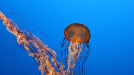 Just a Little Jelly