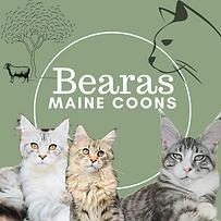 Bearas Logo.png