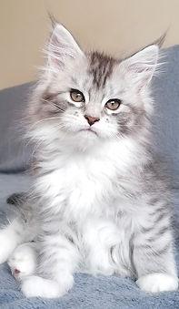 ishtar kitten 4.jpg