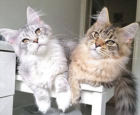 Buea and Ishtar.jpg