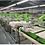 Thumbnail: Máy in oval ESSY-A104, 4 màu, 16 bàn , khung in 500x700mm