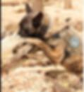Screen Shot 2019-12-15 at 4.00.26 PM.png