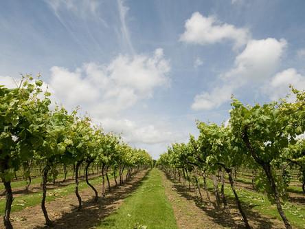 Biddenden Vineyards